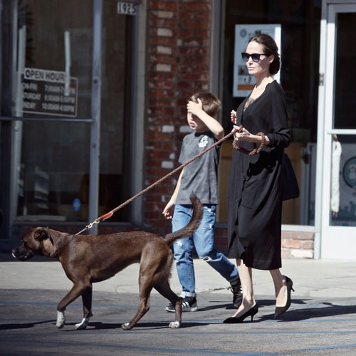 Anglina_Jolie_And_Son_Knox_New_Dog